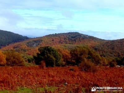 Castañar de El Tiemblo - Pozo de la Nieve - ruta octubre, senderismo en otoño